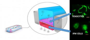 Schematic of the Emulate Organ-chip